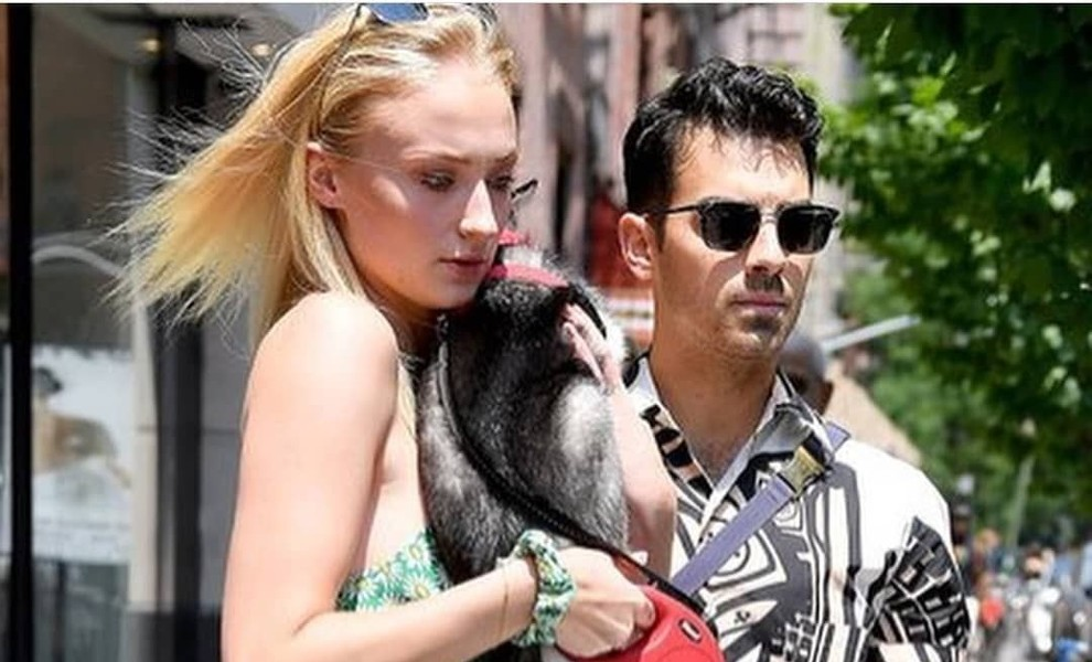 Sophie Turner y Joe Jonas pierden a su perrito en un trágico accidente